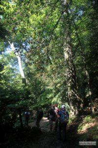 Forêt Domaniale de La sainte Baume